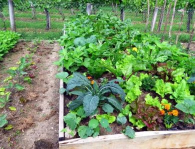 Vegetable Garden Fertilizer Guide